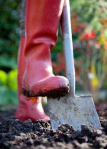 Digging With Spade in Garden