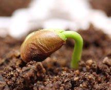 Seed starting-2:web