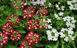 Color in the Garden:2web
