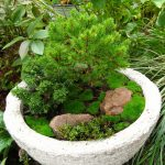Miniature container garden