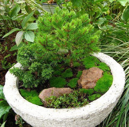 Awesome Miniature Container Garden