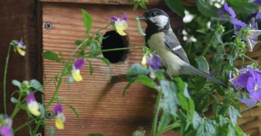 Etonnant Backyard Birding Creates A Lifetime Of Memories