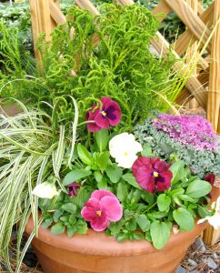 Mixed container with pansies