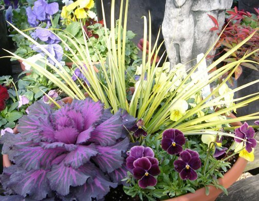 Plant Containers For Winter Joy Triangle Gardener Magazine