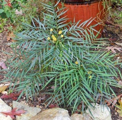 Árboles mojados del sol - el jardinero sensible
