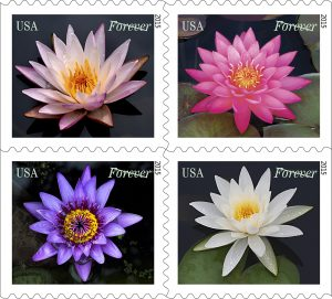 Water Lily stamps / USPS