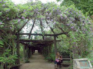 Coker Arboretum Arbor
