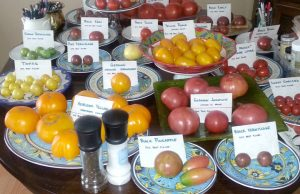 Tomato varieties - by Brie Arthur