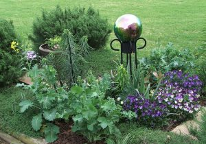 Front yard vegetable garden - Carla Carp