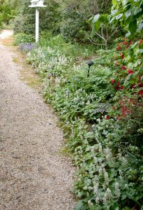 The Harville garden / Tom Garville