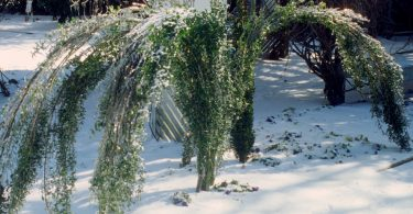 Protect plants from winter
