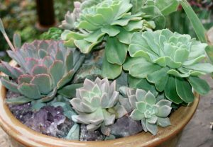 Container with succulents / Helen Yoest