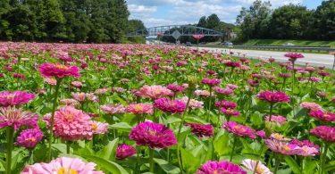 North Carolina Wildflower Program