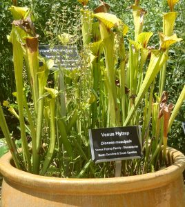 Pitcher plants-by Dale Batchelor
