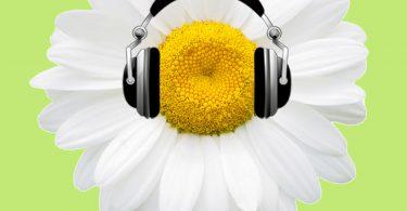 Triangle Gardener podcast logo