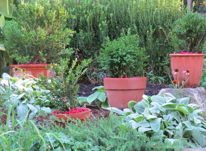 Triangle Gardener Magazine