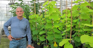 Dr. Denny Werner in his research greenhouse