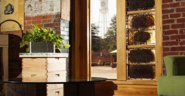 Burt's Bee O-Hive