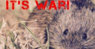 War of the Voles