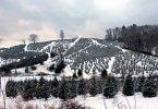 Winter-Tree-Farm