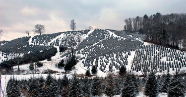 Winter-Tree-Farm