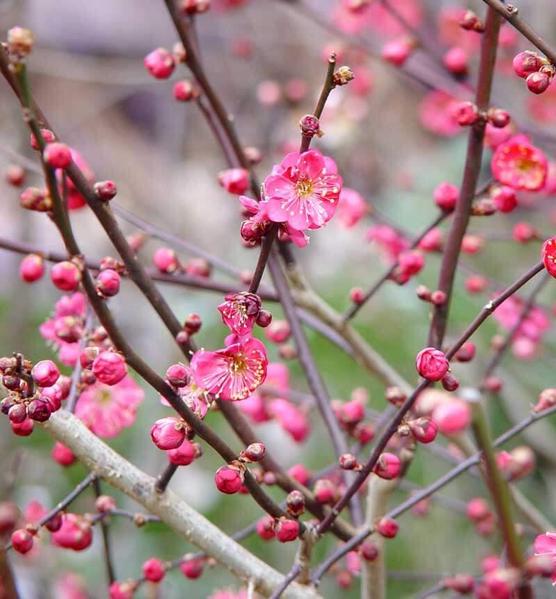 Arreglo de flores de invierno - ENGWALL WOLFF'S FLOWER SHOP, WI Superior