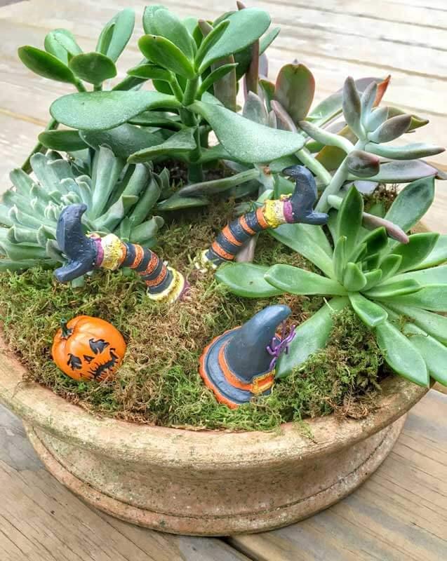 Design Ideas for Arranging Indoor Plants   Triangle Gardener Magazine