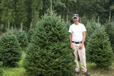 Joey Miller christmas trees