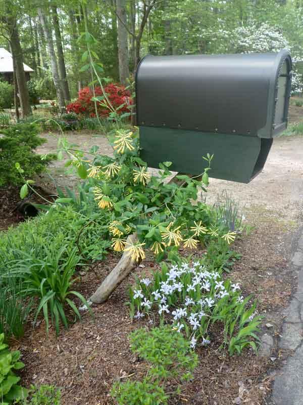 Plants at mailbox