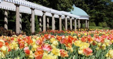 Triangle gardener magazine your local guide to enjoyable gardening in the raleigh durham for Richmond home and garden show 2017