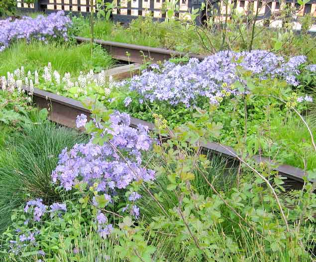 Spring Blooming Plants For The New American Garden Triangle