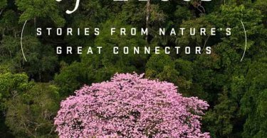 Understanding The Intricate Life of Trees