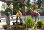Chapel Hill Garden Club