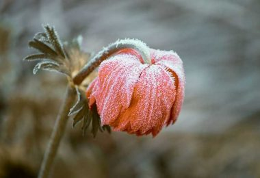 Frost on a flower