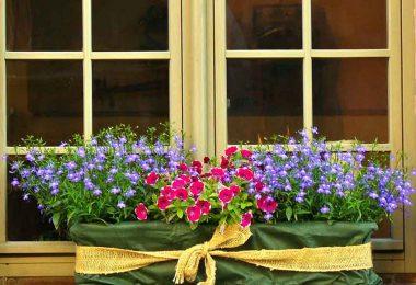 Window box in garden room