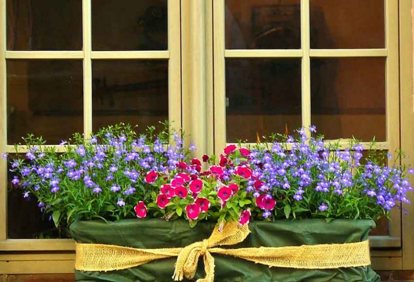 Window box in garden room