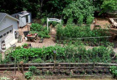 Mike Richardson garden