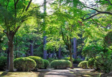 Garden design / Mathis Jrdl-Unsplash