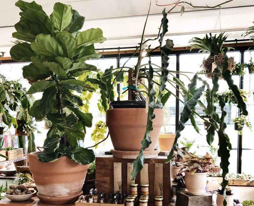 Creative Pot And Planter Placement Ideas To Enhance Your Garden Design Triangle Gardener Magazine