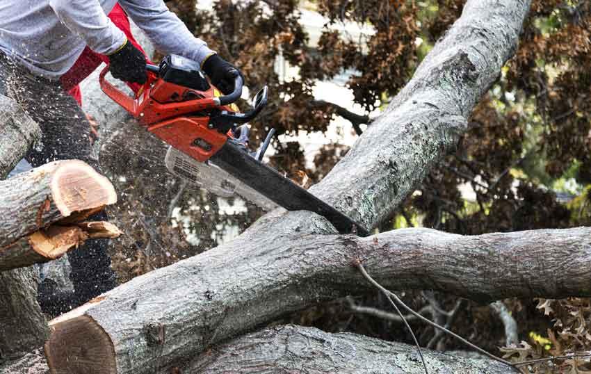 Sawing tree limb